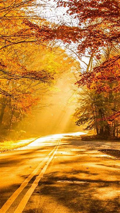 Fall Autumn Foliage Road Wallpapers 4k Mobile