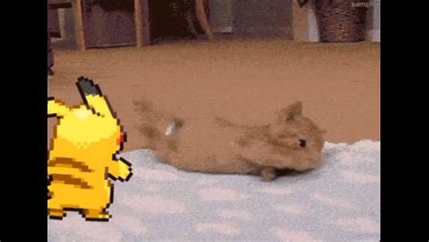 Pokemon In Real Life Pikachu Pushin A Cat Youtube
