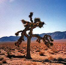 joshua tree wikipedia