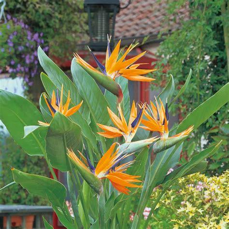 Gardenandgreencouk  Gardening  Nature  Greener Living