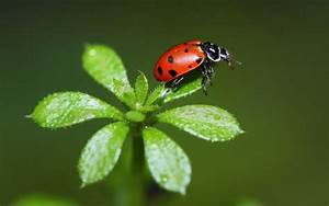 Attracting Beneficial Insects - Pesche's