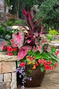 Herbstblumen Für Kübel : gartenideen im herbst bringen sie ihre topfpflanzen nach drinnen ~ Buech-reservation.com Haus und Dekorationen