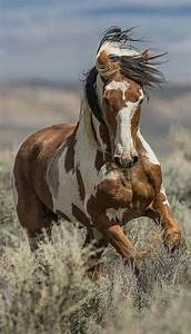 Pin, By, Antonio, Infante, On, Pferde