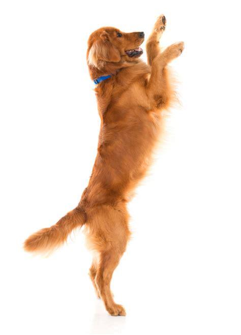learn   greet friends barking dog  star
