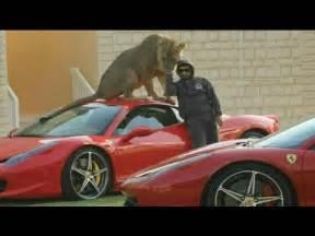 Dubai Pets Lion