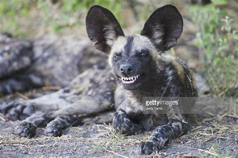dog teeth mouth jaws dogica  dog teeth problems