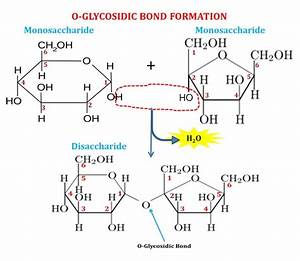Disaccharides  Definition   Examples