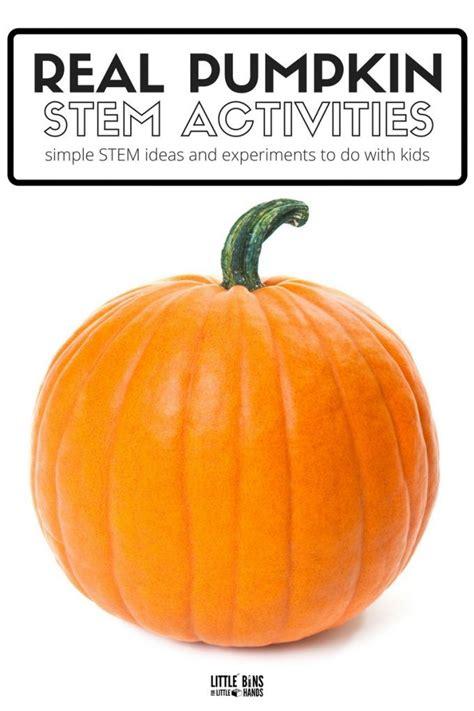 Best 25+ Pumpkin Stem Ideas On Pinterest  Glitter Pumpkins, Black Pumpkin And Simple Pumpkin