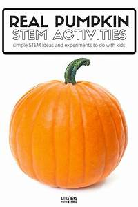 Real Pumpkin STEM Activities for Fall Learning Ideas ...