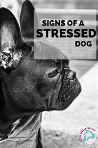1000+ images about Anxiety in Pets on Pinterest