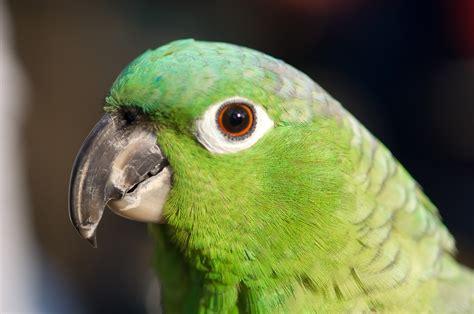 380371 Green Parrot Wallpapers