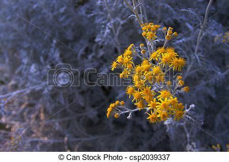 grijze bladeren gele bloem plaatje van bladeren grijze gele tegen kleine