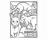 Coloring Wallaby Kangaroo Zoo Diego San Line sketch template