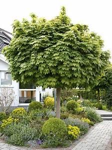Kleine Bäume Für Den Garten : hausb ume f r kleine g rten gardens garten and garden ideas ~ Markanthonyermac.com Haus und Dekorationen