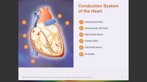 Ep Ablation Coding & Compliance