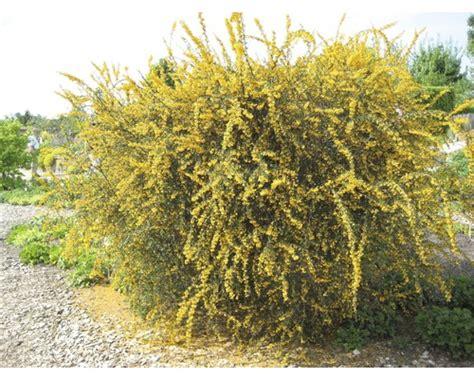 pflanzen set vorgarten immergruen   stk bei hornbach kaufen