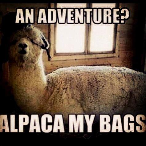 Alpaca My Bags Meme - an adventure alpaca my bags