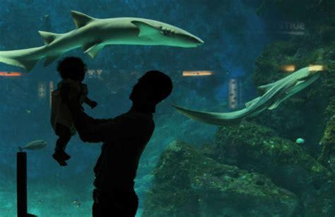aquarium du grand lyon aquarium de lyon sortie aquatastique en famille