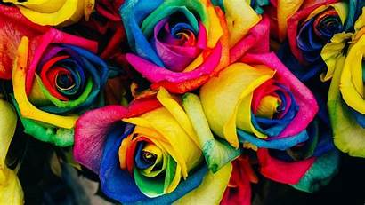 Roses Multicolor Backiee