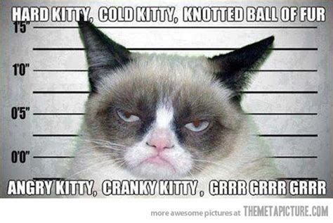 Mad Kitty Meme - soft kitty memes image memes at relatably com