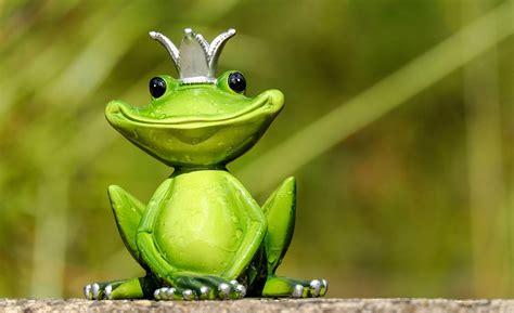dinosaur extinction paved     explosion  frog