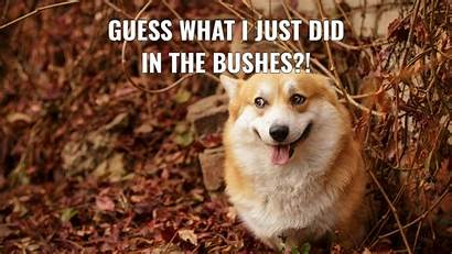 Memes Animal Wallpapers Funny