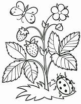 Strawberry Coloring Pages Fruits Grapes sketch template