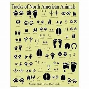 Small Animal Tracks Poster