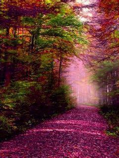 purple autumn falls road mobile wallpaper