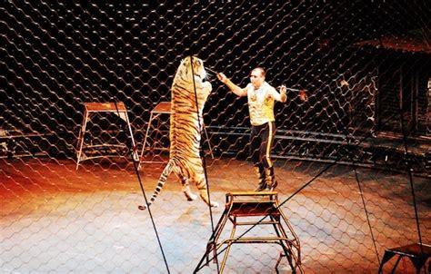 Biglietto Ingresso Circo Rinaldo Orfei Tigre Fugge Da Un Circo Nel Palermitano Blogsicilia