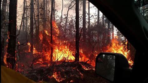 wildfires  burned  florida  start  year