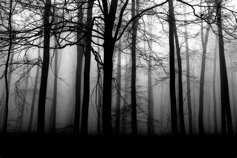 Dark Forest Background With Moon Dark Forest Interactive Rpg Ambience Player