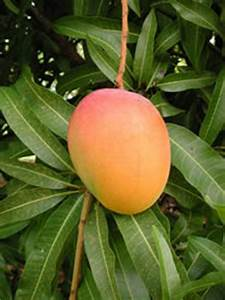 Indian News Reader: Indian National Fruit