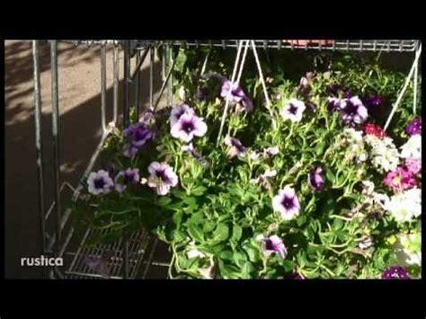 fleurs d 233 t 233 et vivaces pour jardini 232 res au soleil