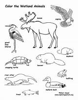 Coloring Wetland Animals Canada Waldtiere Ecosystem Ausmalbilder Malvorlagen Tiere Kinder Animal Pond Colouring Konabeun Forest Coloriage Ecosystems Animaux Ausmalen Amerique sketch template