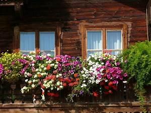 blumen an einem balkon in den alpen balcony window With katzennetz balkon mit beach garden frankreich