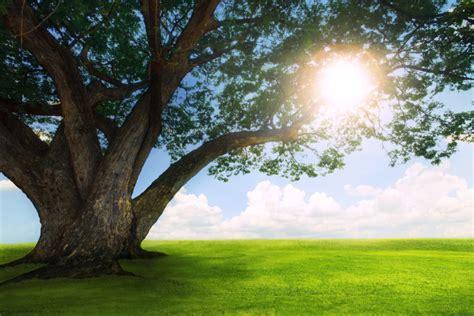 bureau paysage beau paysage arbres herbe verte et le soleil brille ciel