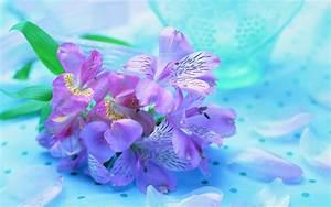 Violet Flowers Desktop Wallpaper