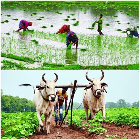 dismantling agriculture