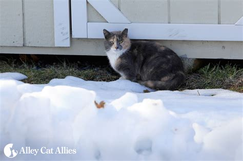 alley cat allies alley cat allies ten winter weather tips for outdoor cats