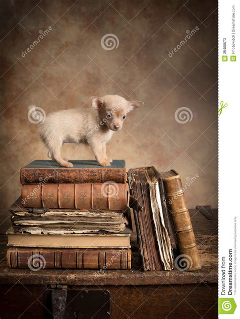 Puppy Dog On Vintage Books Stock Image Image Of Antique