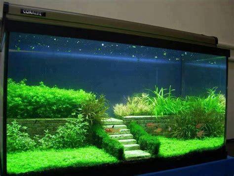 Simple Aquascaping Ideas by Aquascaping Terrarium And Aquarium On