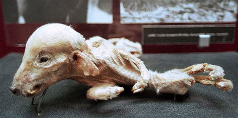 Chernobyl Mutations Animals And Humans