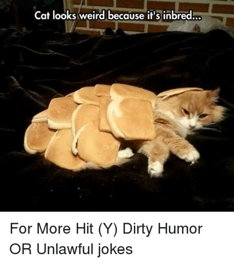 Dirty Joke Memes - cat looks weird because it s inbred for more hit y dirty humor or unlawful jokes cats meme on