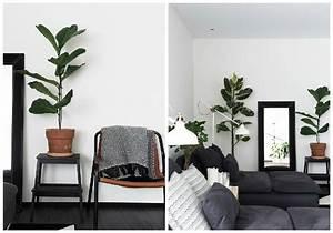 Marc De Café Plantes D Intérieur : plantes d 39 int rieur d corez avec des plantes vertes ~ Melissatoandfro.com Idées de Décoration