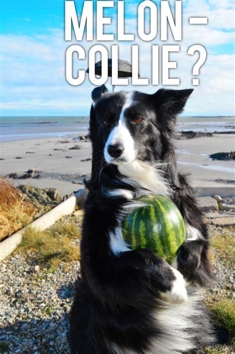 connieim   melon collie     asha