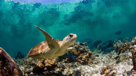 terralonginqua sipadan underwater turtle photography