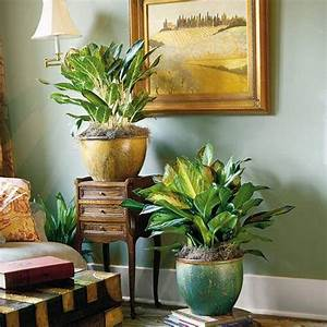 Home Designs And Decor , Beautiful Amazing Indoor Plants ...