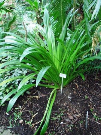 kreasi taman indah tanaman perdu