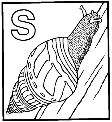 snail coloring page getcoloringpagescom